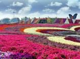 Dubai Miracle Garden (15)