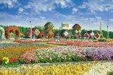 Dubai Miracle Garden (24)