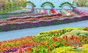 Dubai Miracle Garden (27)