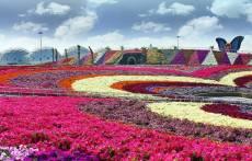 Dubai Miracle Garden (35)