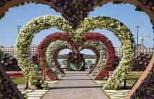 Dubai Miracle Garden (37)