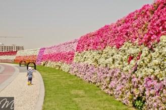 Dubai Miracle Garden (6)