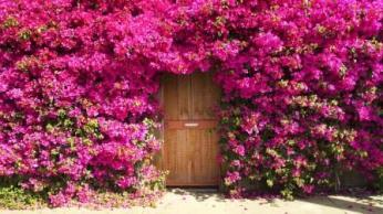 Rengarenk çiçekli kapı giriş tasarımları (17)