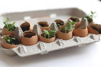 Yumurta kabukları ile organik saksılar yapılabilir :)