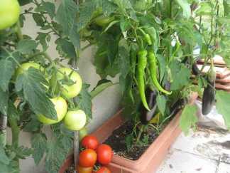 Balkonda Sebze Nasıl Yetiştirilir