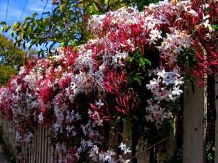 Mum Çiçeği Bitkisi Yetiştirmenin Püf Noktaları