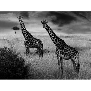 Afrika 09 by Cem Boyner
