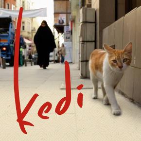кошка-фото1