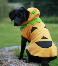 Halloween Costumes for Big Dog Breeds and Small Dog Breeds ...