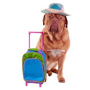 Dog Travel Essentials