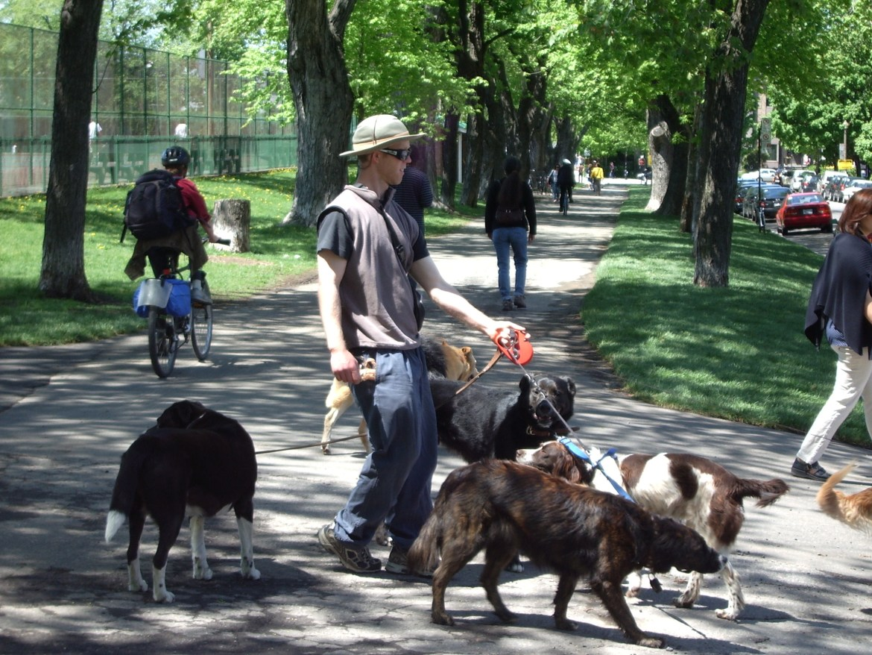 dog-walker-salary