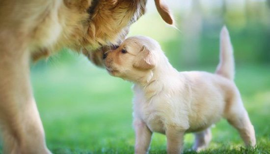 puppy and mummy
