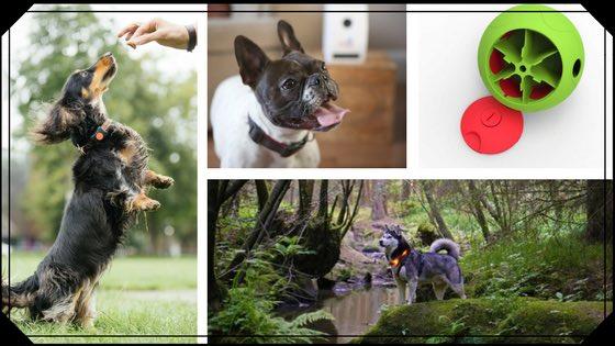 blog image for dog tech