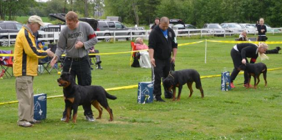 What is Breed Handling?