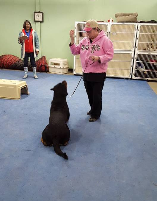 How Early Can My Puppy Learn Commands?