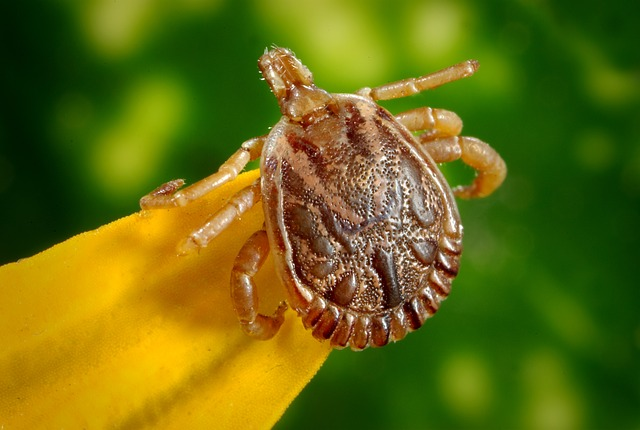 Canine College Warns Of Lingering Presence of Ticks