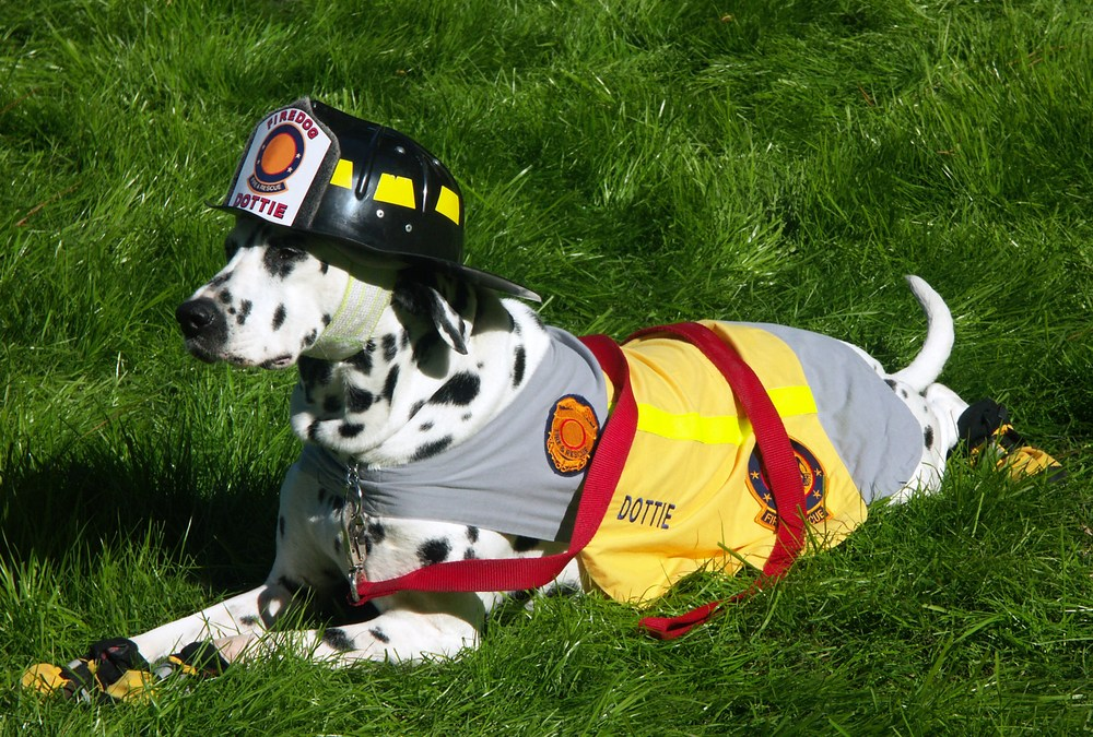 dog in firefighter outfit