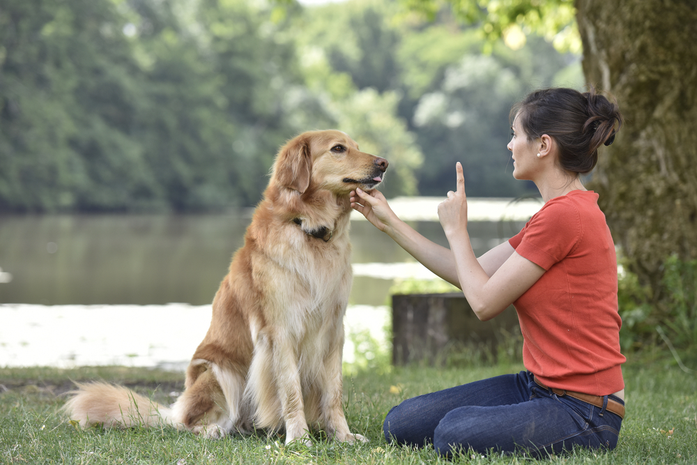 The Rules of Positive Reinforcement