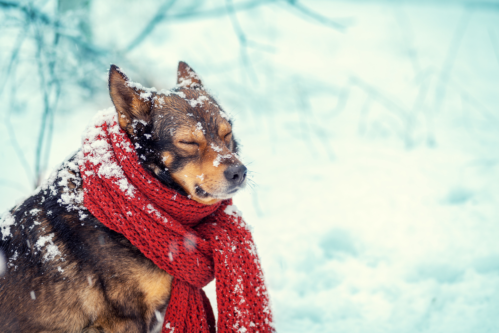 Keeping Your Dog Safe, Healthy & Happy This Winter