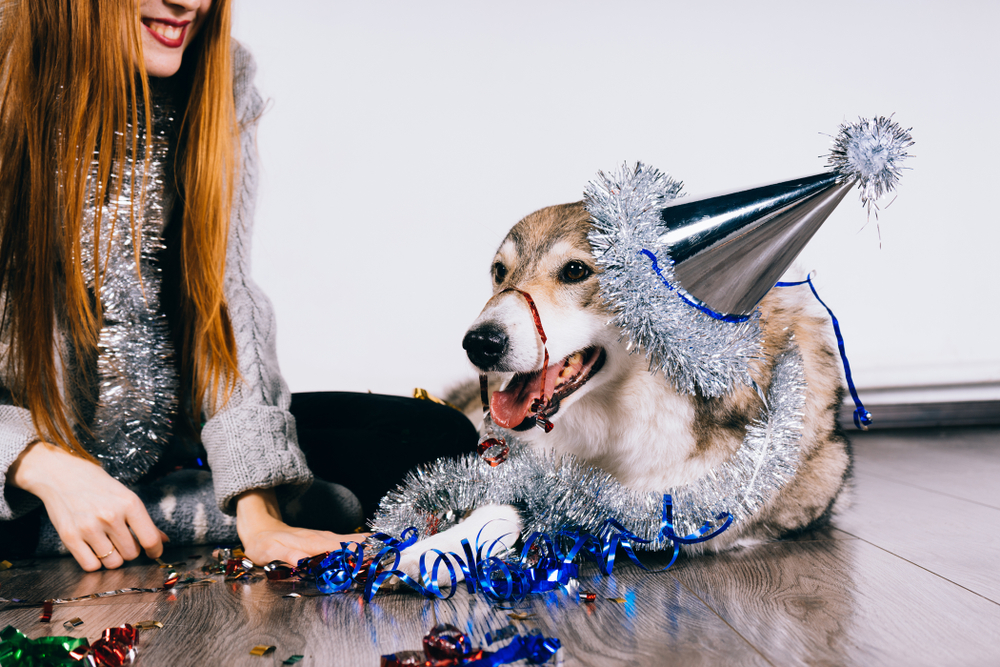 New Year's Resolutions for You, and Your Dog