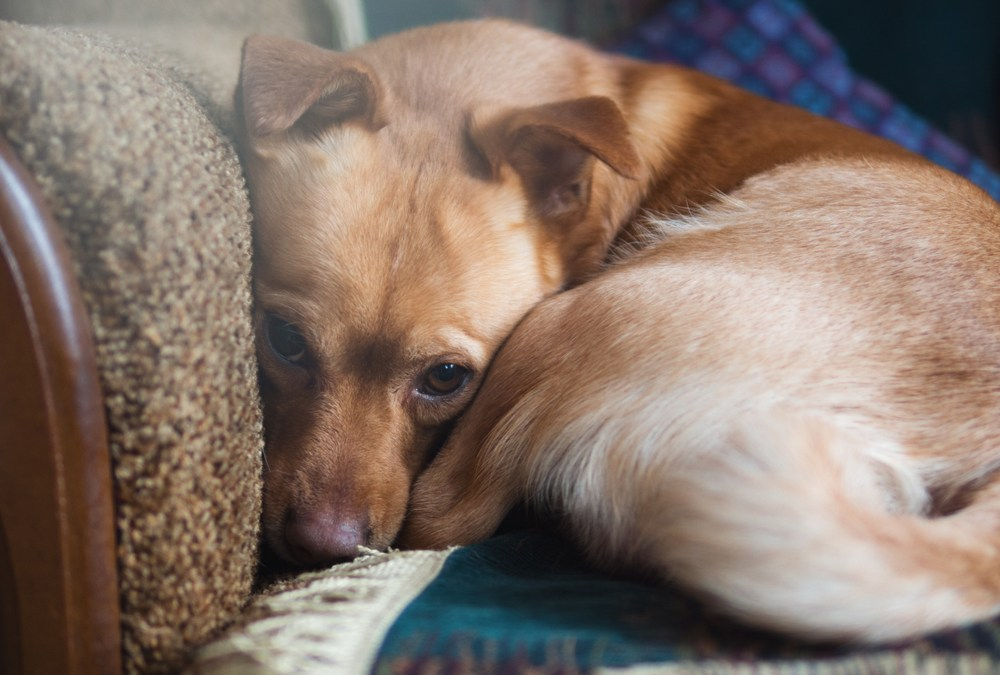 Helping Your Dog Deal With Anxiety