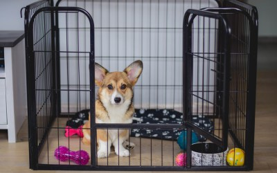 Why Crate Training Your Dog is Important