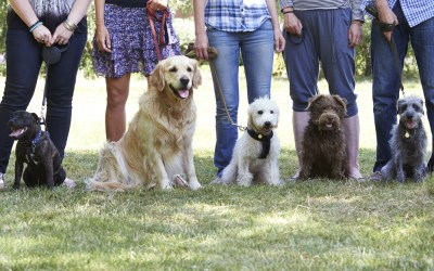 Are Group Dog Training Classes Right for my Dog?