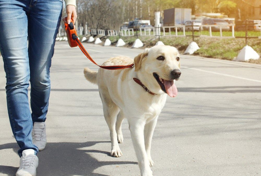 5 Tips for Leash Training a Puppy