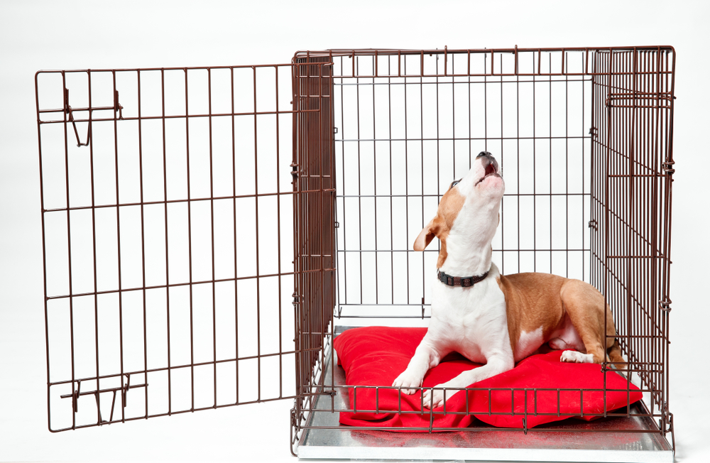 dog barking in crate