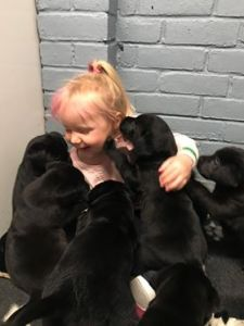Child with a litter of Black Labradors