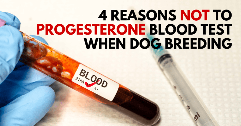 4 Reasons not to Progesterone Blood Test when Dog Breeding