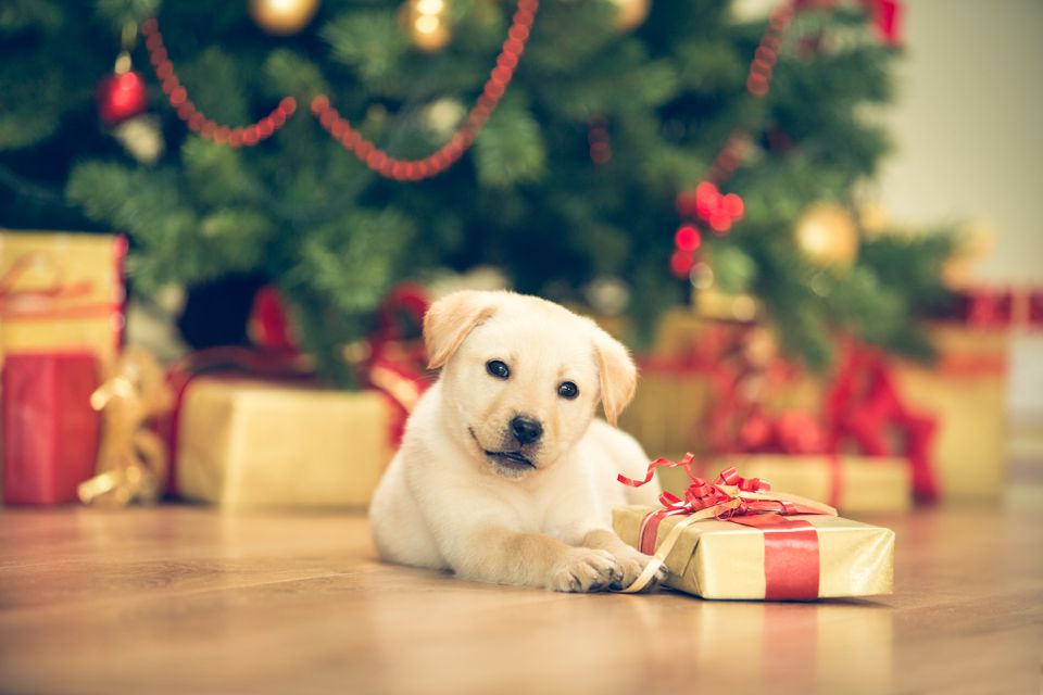 Puppy and Christmas Tree Safety