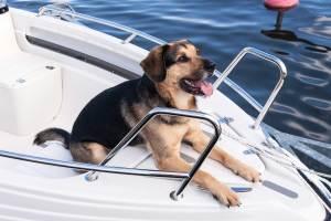 Newburyport Dog
