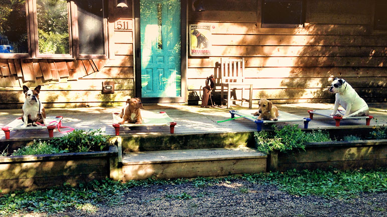 Board and Train Dog Training   Canine Peace of Mind   Chicag Area Dog Training