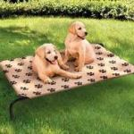 comfortable elevated dog bed