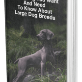 Guide To Large Dog Breed