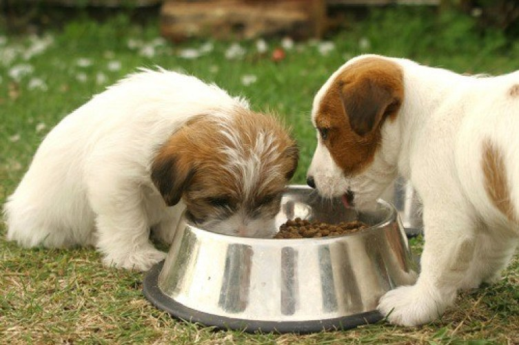 Couple Of Puppies Eating from a Food Bowl