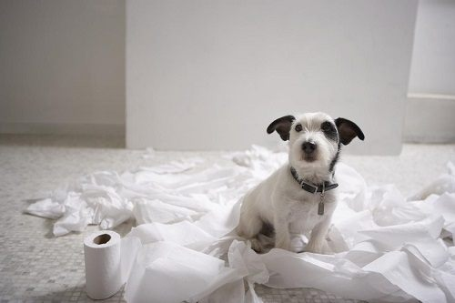 Dog making a mess with toilet paper