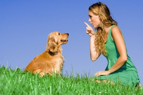 Girl in a green dress talking to a dog in the meadow