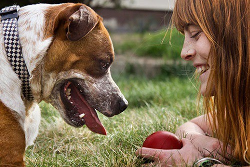 Girl teaching her dog with red ball