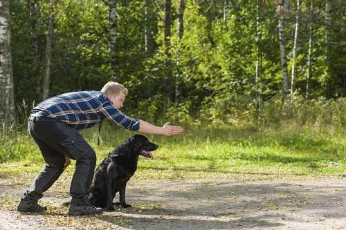 Man giving hand order to large black dog