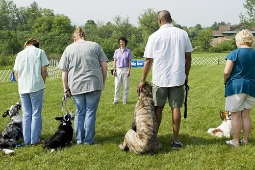 Instructor giving direction to a line of owners with their dogs during a dog training class