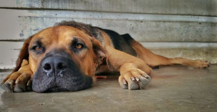 gastrointestinal issues in dogs