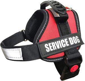 Best Service Dog Vest