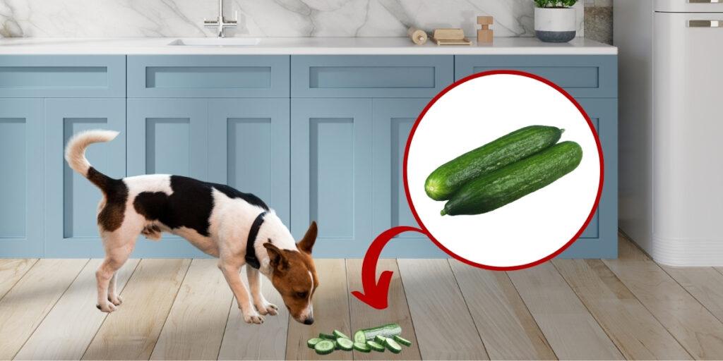 dog eating cucumber