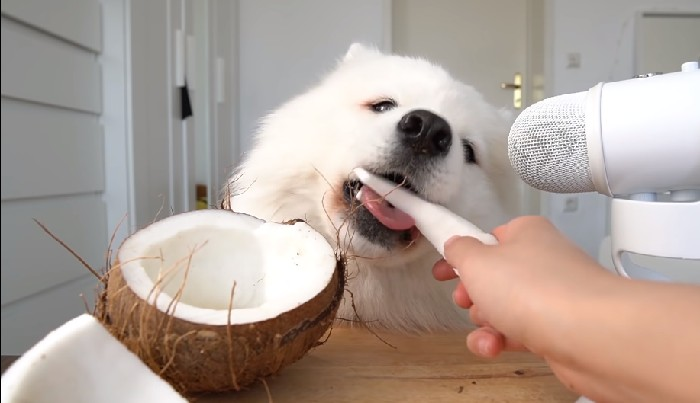 Best Way to Feed Coconut to Dogs