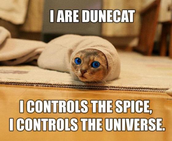 También te quedarías sin memes de gatitos.