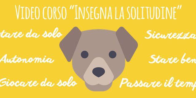Corso Insegna La Solitudine Cani Per Amici
