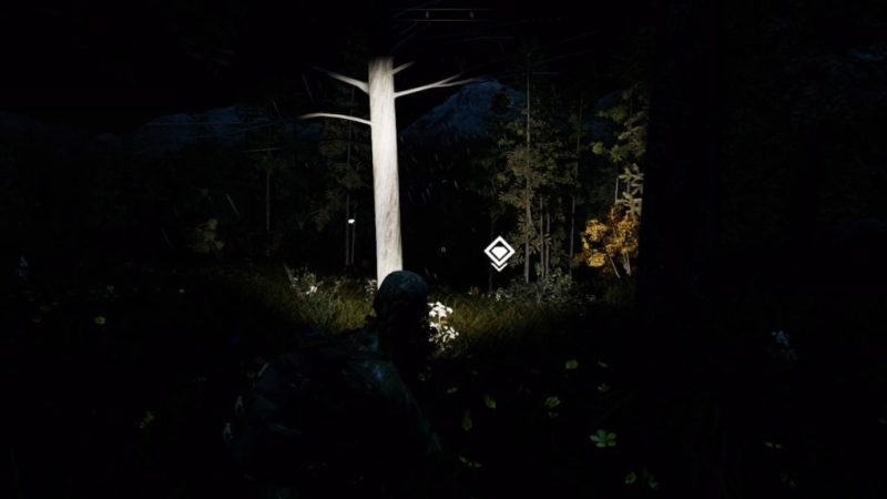 Night time illuminated by flashlight with animal tracks indicated by icons.