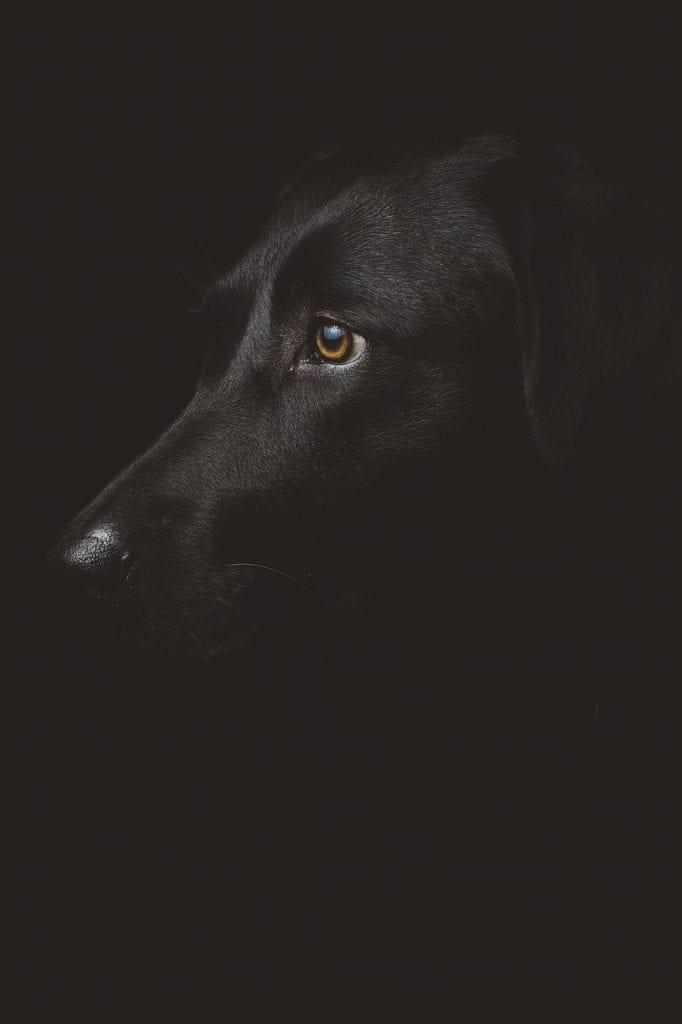 Communiquer Avec Son Chien Apres Sa Mort : communiquer, chien, apres, Faire, Deuil, Chien, Comment, Mieux, Vivre, Décès